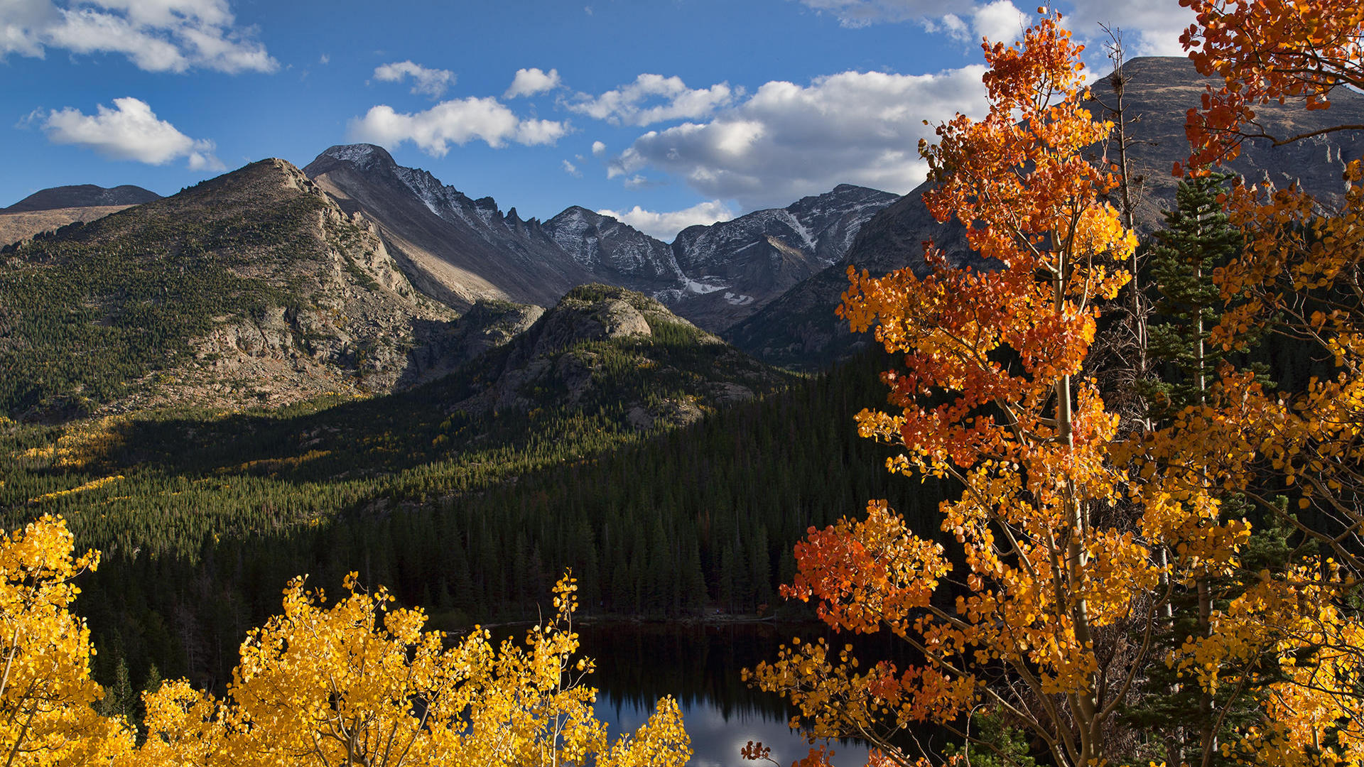 Autumnal trees with mountains in the distance
