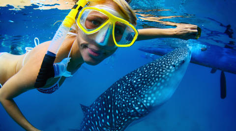 Woman swimming with whale sharks in Curaçao