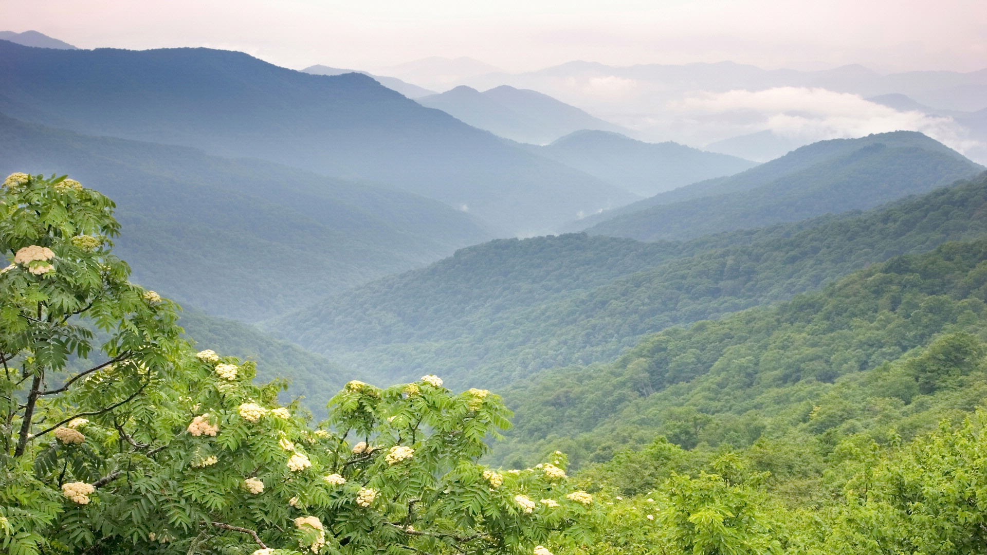 Roanoke mountain adventures for Table 52 roanoke va